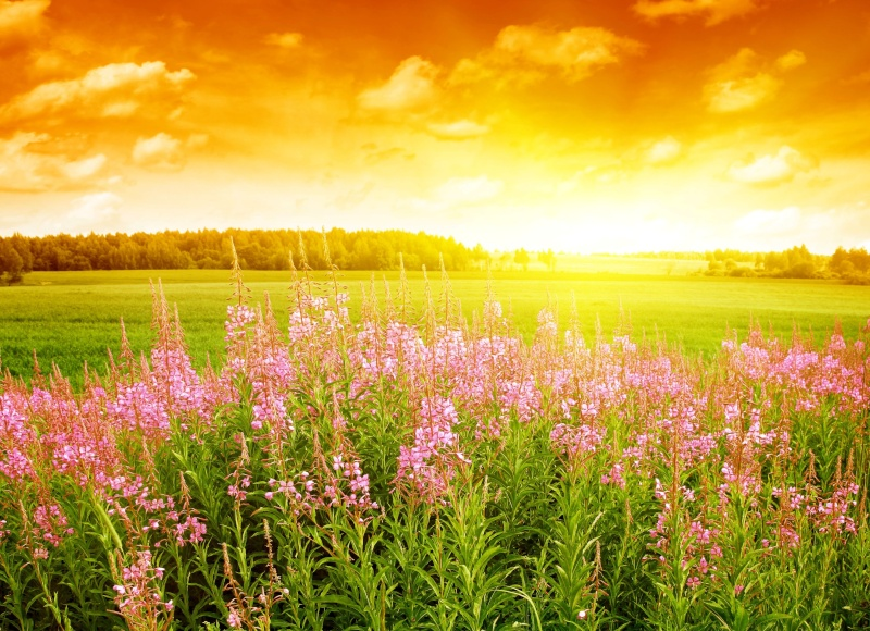 Images spirituelles, inspirantes, apaisantes,... 24340513