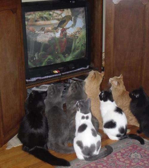 Les meilleures photos humour/tendresse animaux!  44626_10