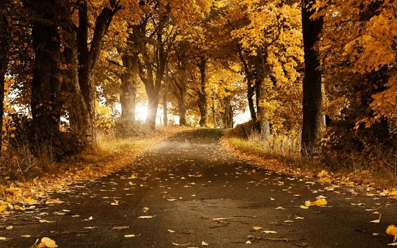 Images spirituelles, inspirantes, apaisantes,... Autumn10