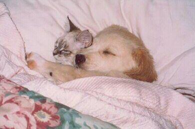 Les meilleures photos humour/tendresse animaux!  Chat_d10