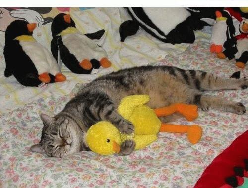 Les meilleures photos humour/tendresse animaux!  Chat_e10
