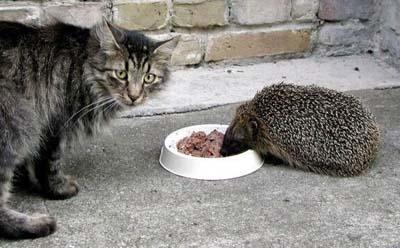 Les meilleures photos humour/tendresse animaux!  Chat_e11