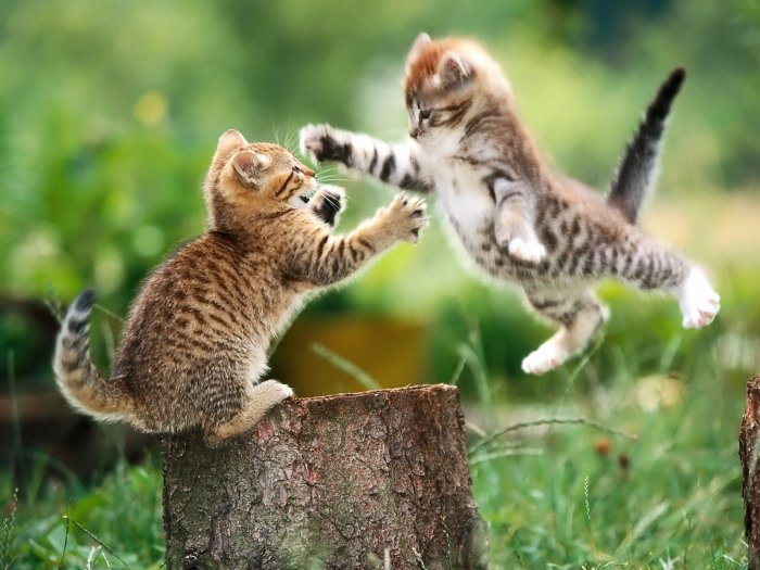Les meilleures photos humour/tendresse animaux!  Chats-10