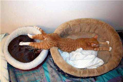 Les meilleures photos humour/tendresse animaux!  Photo-10