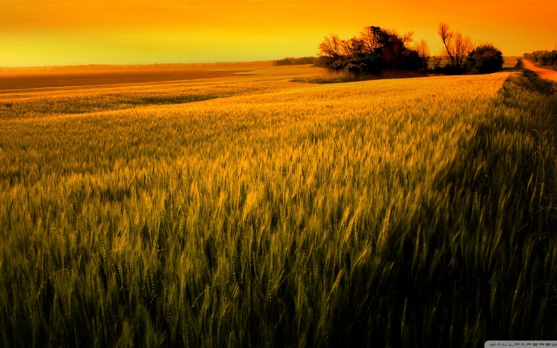 Images spirituelles, inspirantes, apaisantes,... Xiwhgs10