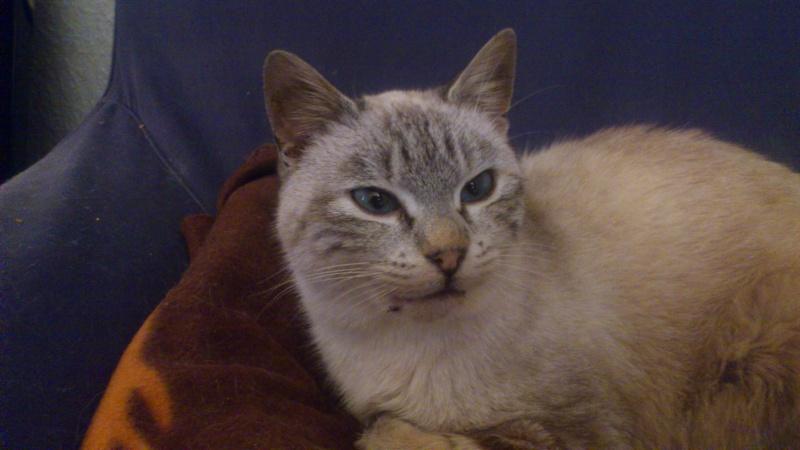 Adoptée, Nala, chaton femelle de 6 mois IE 250268711035666 Dsc_0010