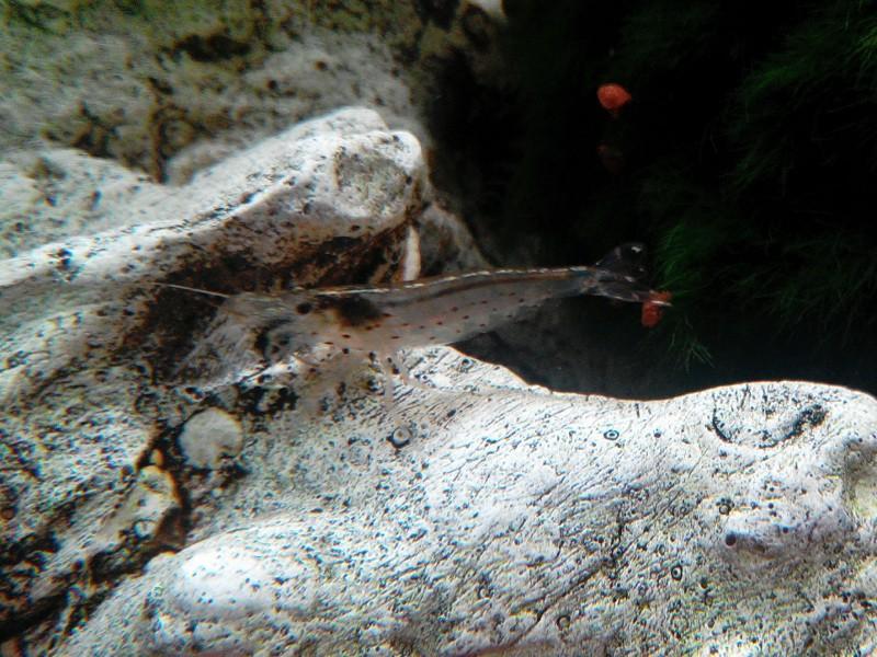 Aquadream 100 Img_2017