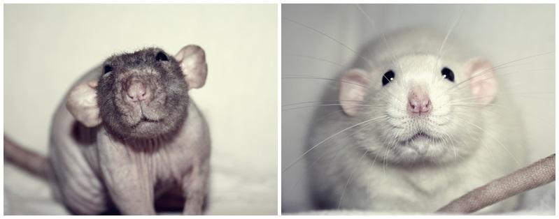 Les Hoop & Rats - Page 4 Cats14