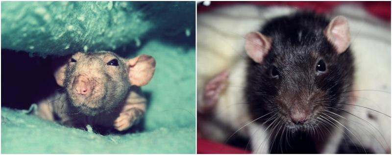 Les Hoop & Rats - Page 4 Cats15