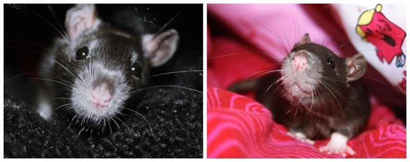Les Hoop & Rats - Page 4 Huioh10