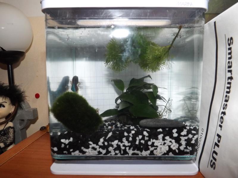 Mes aquas actuels  Dscf0915