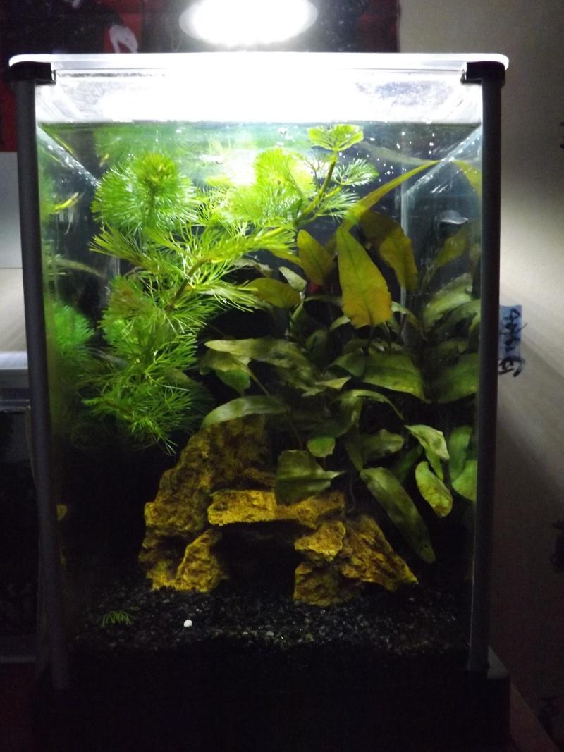 Mes aquas actuels  Dscf0919