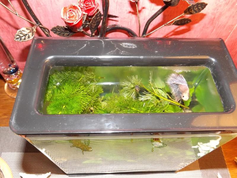 Mes aquas actuels  Dscf1011