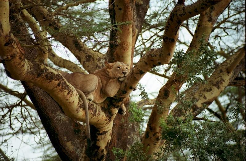 Les photos exposées sur les bords de la Reyssouze Lionne10