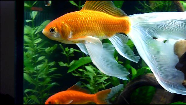 Le 140 litres de mes poissons rouges !  - Page 26 2510