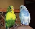 Il était une fois, Pépette et Coco... - Page 4 Dscf2422