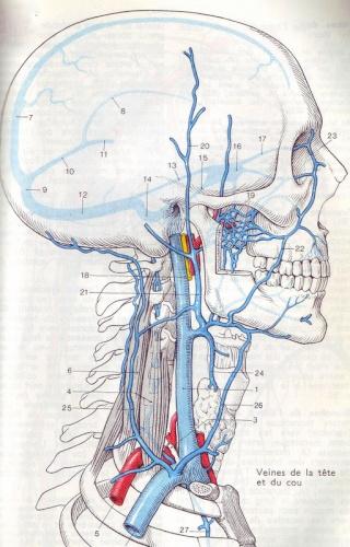 Un rôle possible de C. Pneumonia ... - Page 6 Journa53