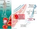 Un rôle possible de C. Pneumonia ... - Page 6 Journa48
