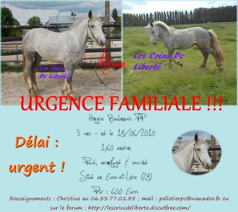 dpt28, ALBAN, Boulonnais,  adopté par Daphney89 (2014) Alban_10