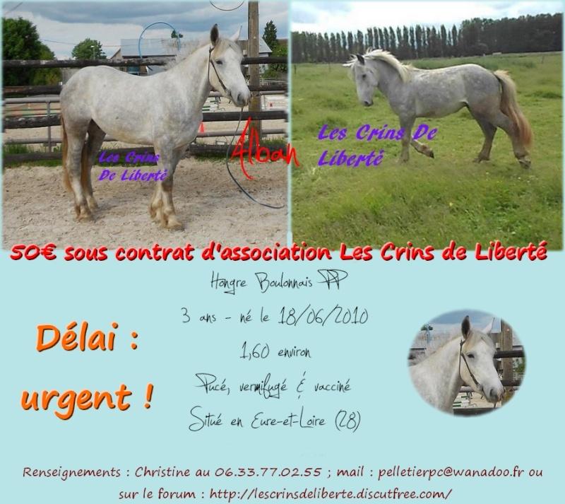 dpt28, ALBAN, Boulonnais,  adopté par Daphney89 (2014) Alban_11