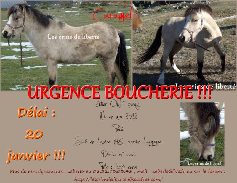 (Dpt 48) CARAMEL - ONC Poney - Sauvé par Hélèna !!!!!!!!!!!! (Janv 2014) Carame10