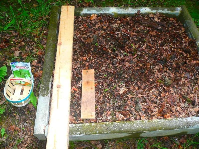 Semer dans le mulch 116