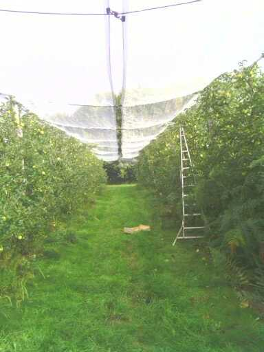 Ramasser ses pommes au verger. 13809613