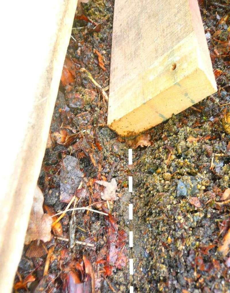 Semer dans le mulch 313
