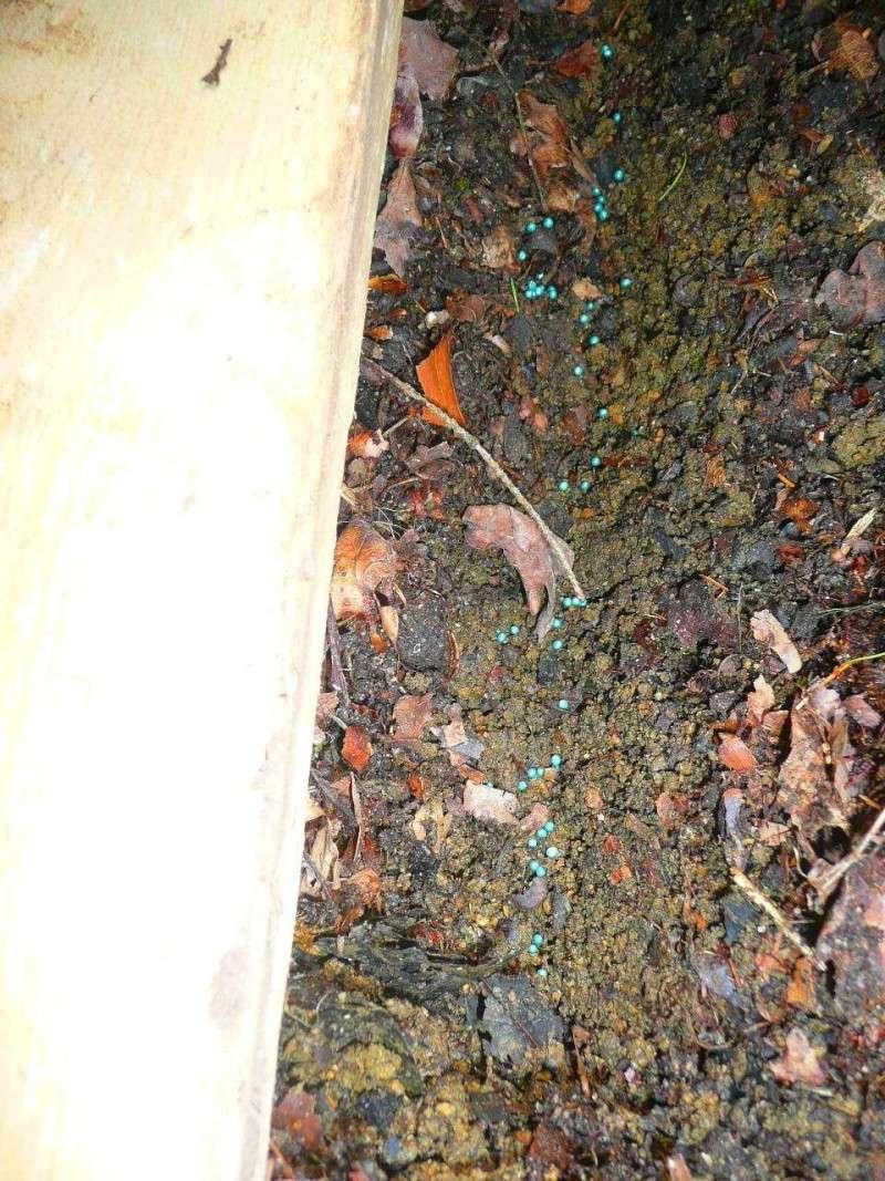 Semer dans le mulch 512