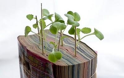Plantes et cellulose 610
