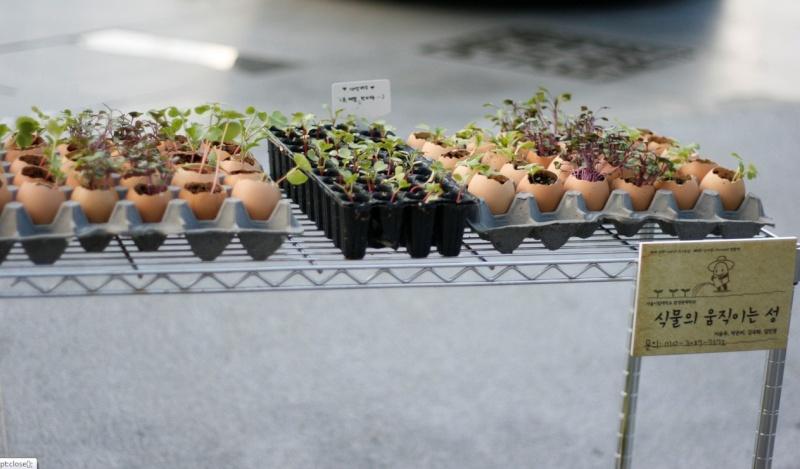 Préparation des semis, terre végétale et bétonnière… Coqill10