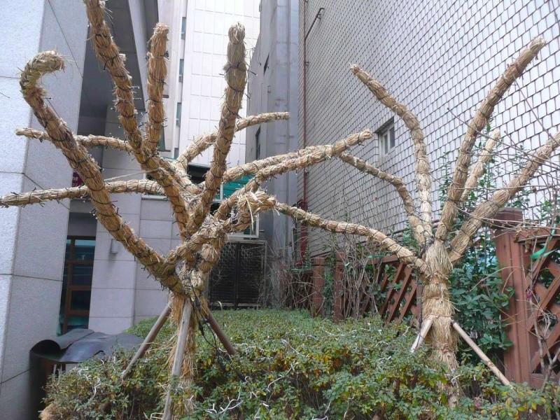 Protéger ses jeunes plants avec des fougères P1320515