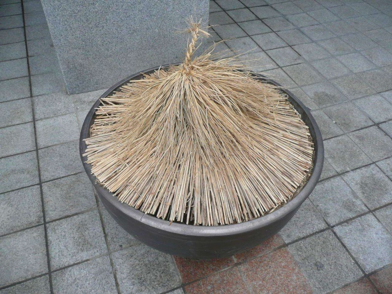 Protéger ses jeunes plants avec des fougères P1320516
