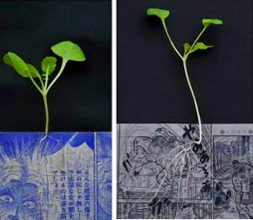 Plantes et cellulose Sans_t11