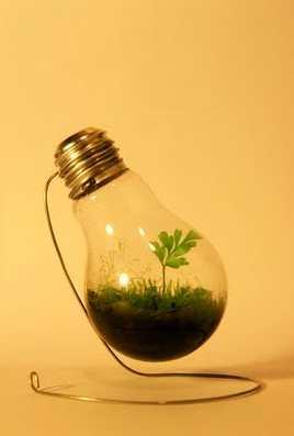 Plantes et cellulose Sg10