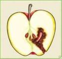 Ramasser ses pommes au verger. Carpo10