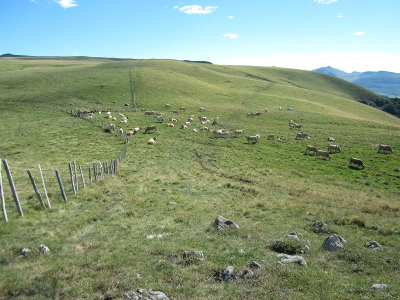 Plateau du Limon : chemin des Quiroux Fabie189