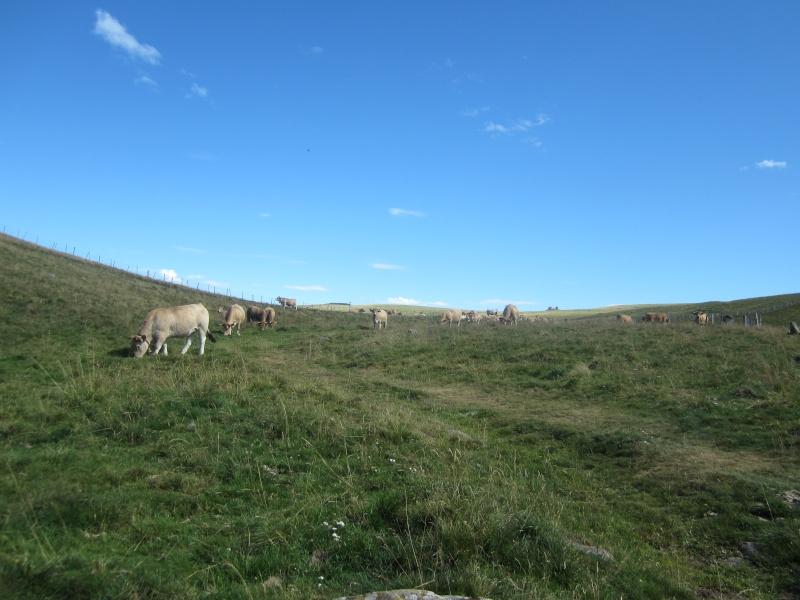 Plateau du Limon : chemin des Quiroux Fabie194