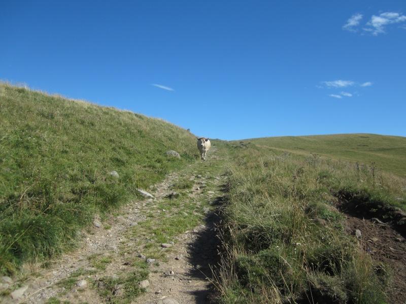 Plateau du Limon : chemin des Quiroux Fabie195
