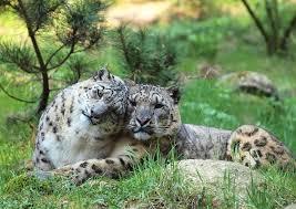Animal Love Pics Leopar17