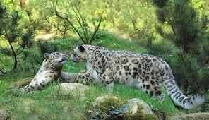 Animal Love Pics Leopar18