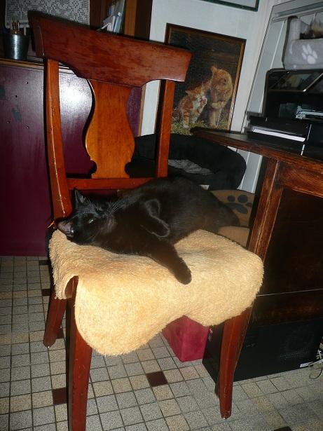 Minuit chat noir Mai 2012 FIV+ (ADPK 35) P1160911