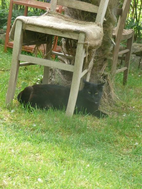 Minuit chat noir Mai 2012 FIV+ (ADPK 35) P1180212
