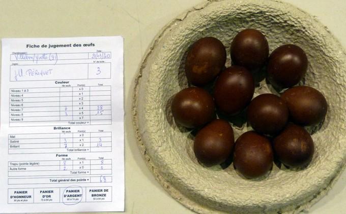 marans - L'œuf de la Marans P1080410