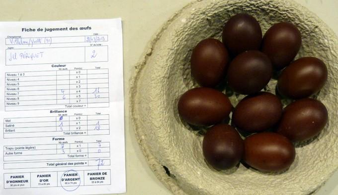 marans - L'œuf de la Marans P1080412