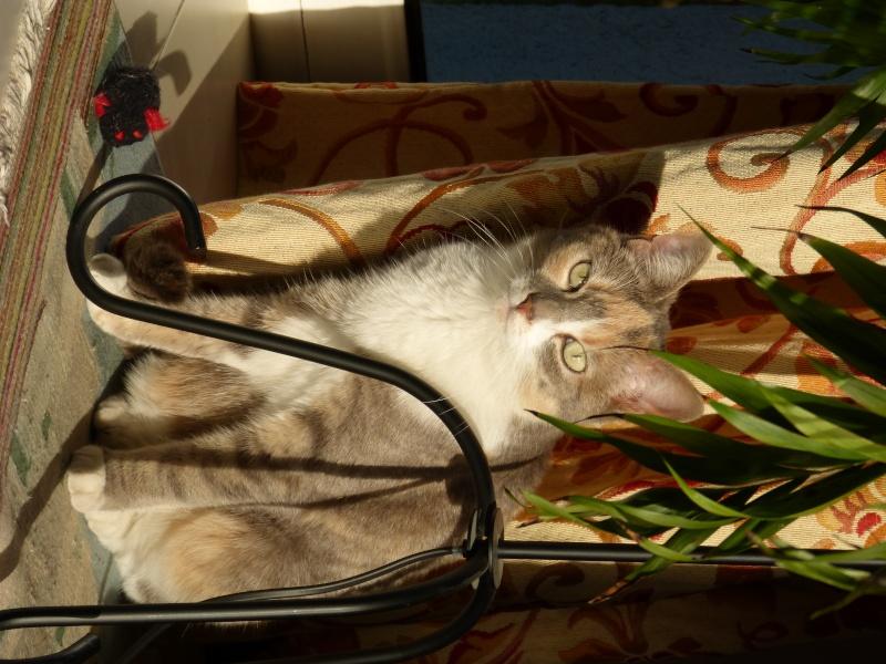 Un chat en retard /griffez-moooi P1010110