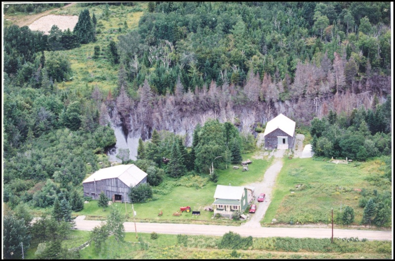 Bernache du Canada surprise  1998-s10