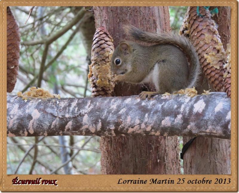 Écureuil roux du jour Canon Acureu27