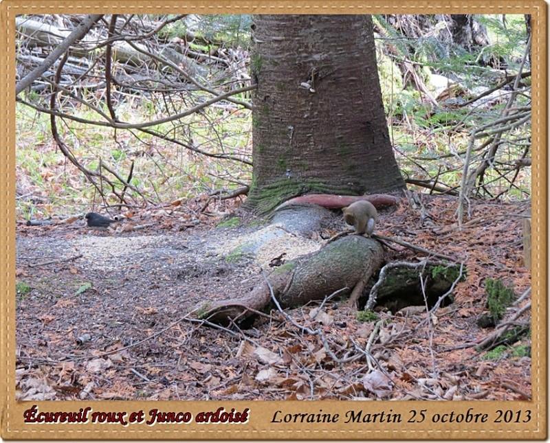 Écureuil roux du jour Canon Acureu28