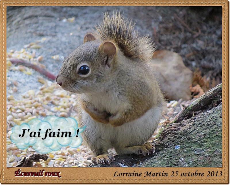 Écureuil roux du jour Canon Acureu29